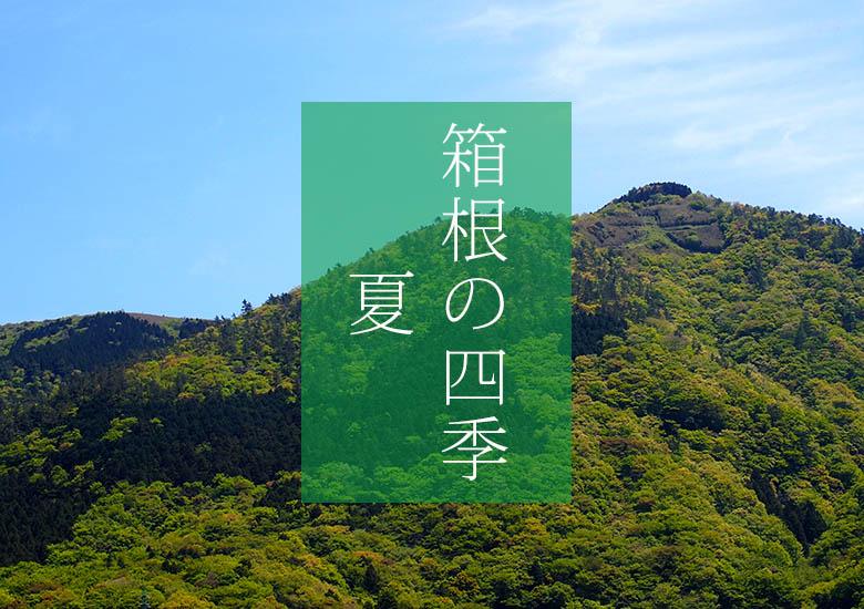 箱根の四季・夏(C)孫三総本家・花詩